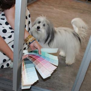 Tucker the Office Dog