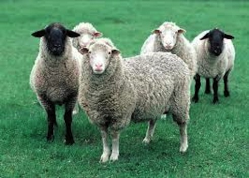 All things sheep and wool will be found at the Wisconsin Sheep and Wool Festival.