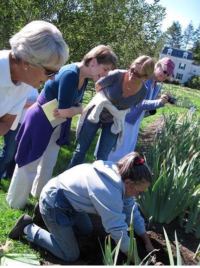preparing the soil How To Grow Organic Irises