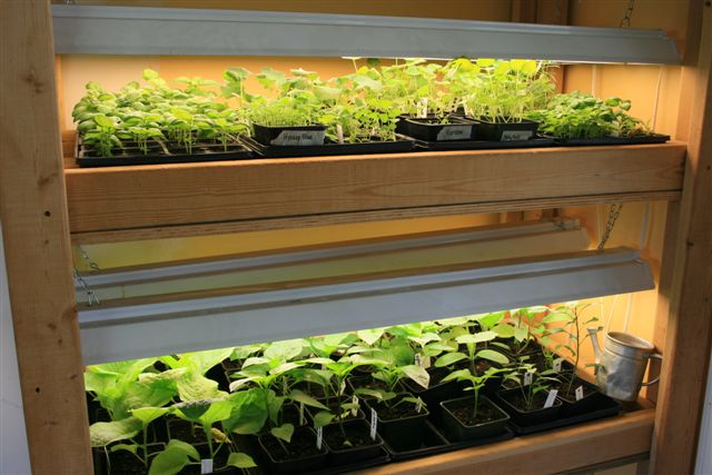 dust off the grow light stand