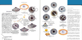 iridology textbook