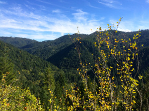 Views of Wilson River Valley along the Trail