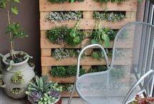 Gardening / by Sharyn Scully
