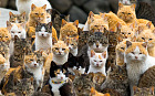 An army of cats rules Aoshima Island in the Ehime prefecture in southern Japan. Curling up in abandoned houses or strutting about in a fishing village that is overrun with felines outnumbering humans six to one.