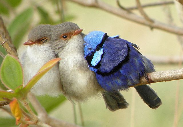 Birds huddle together to stay warm