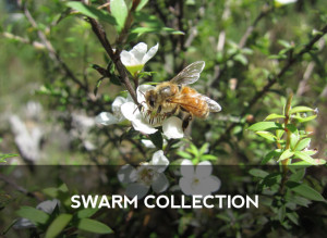 swarm-collection-mix