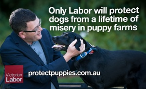 Daniel Andrews and puppy farms