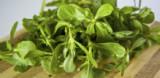 Tušt (portulak) – super zdrava namirnica iz vašeg vrta