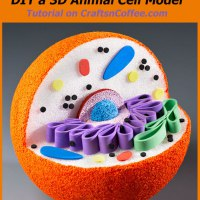 Homework Helper: How to build a 3-D Animal Cell Model