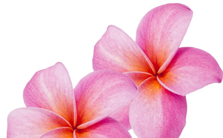 flower-right