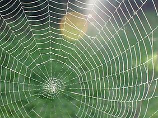 Supplied News 7 ways to spider-proof your house and garden