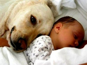 dog-and-baby 1
