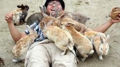 [한컷뉴스] '우글우글 토끼섬'의 무서운 비밀