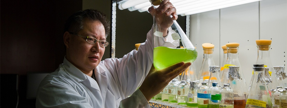 Research shows native algae can help detoxify tailings ponds  - Gordon Chua part of team testing ability of tiny organisms to clean oilsands wastewater