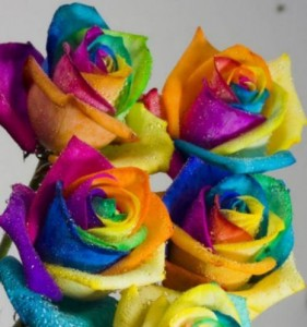 The rainbow rose is a rose which has had its petals artificially colored.