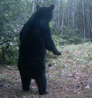 ours vu de dos
