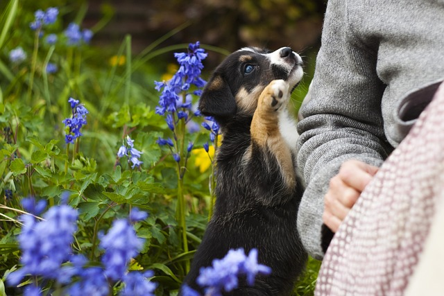Puppy in the garden