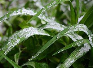 Снег на траве. Архивное фото - рекадр