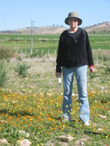 In a field beside the Roman ruin at Volubilis in Northern Africa.