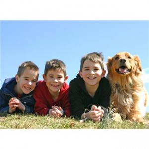 Three boys and Golden Retriever dog