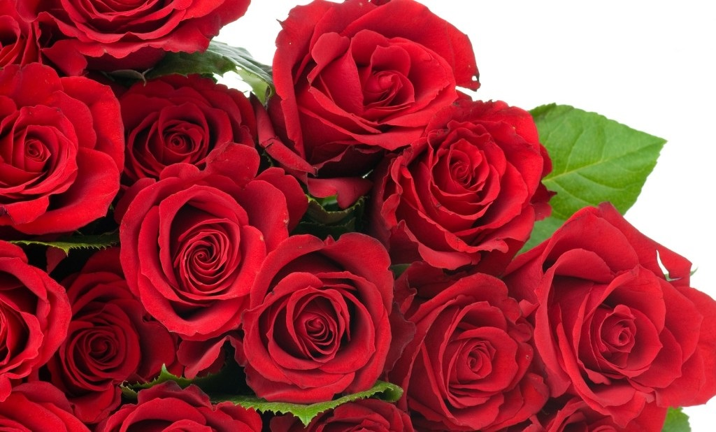 Happy Rose Day Quotes 1