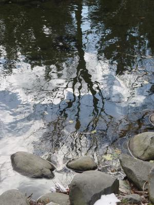 trees-reflected-in-water.jpg - © Michel Paller | Dreamstime Stock Photos