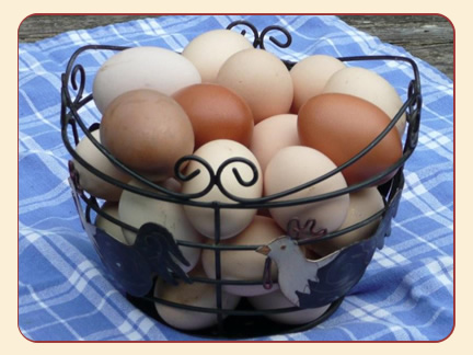 eggs from your hens