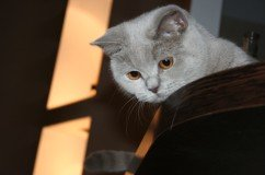 picture of lovely grey cat