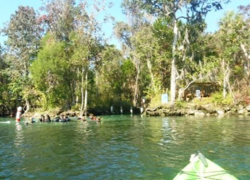 Paddle Crystal River - Three Sisters Spring - Canoe, Kayak