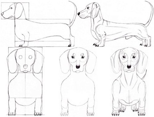 Dachshund Lesson Overview
