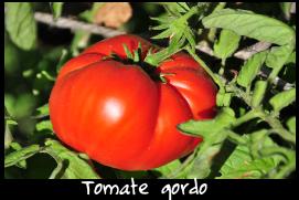 tomategordo.png