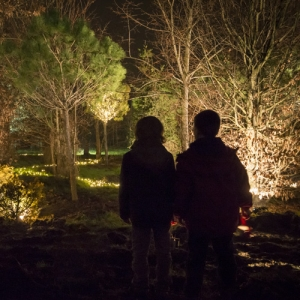 Il Bosco Luminoso Natale