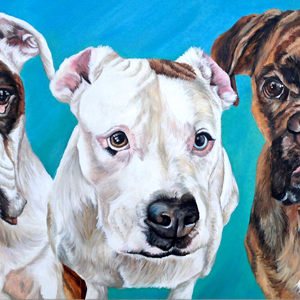 boxer pit bull oil painting by Heather Hughes