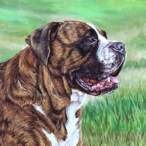 Moose mastiff bully mix oil painting