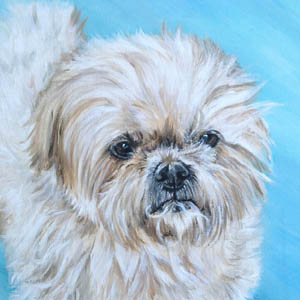 maltese oil painting by heather hughes