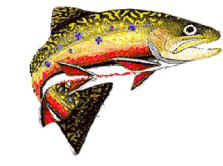 Hatch chart, mayfly chart, Virginia Fly Fishing in the Shenandoah Valley. Virginia fly fishing, Va Fly Fishing, Fly Fish Virginia, Virginia fly fishing with Wild Mountain Trout Fly Fishing.