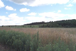 surrounding farmland -- top of Krager Hill Road.