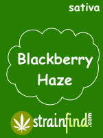 Blackberry Haze