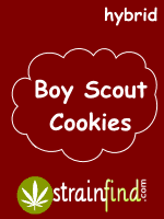 Boy Scout Cookies