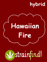 HYBRIDhawaiianfire