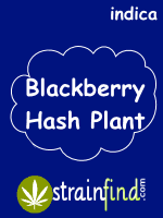Blackberry Hash Plant