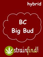 BC Big Bud