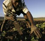 A Haitian farmer
