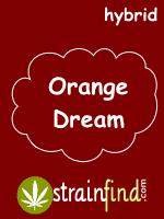 orangedream