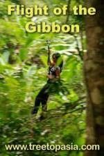flight-of-the-gibbon-1.large.jpg