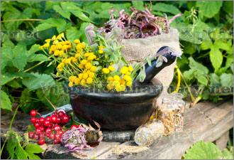 therapeutic-herbs