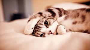 ¿Por qué ver videos de gatos es bueno para la salud?