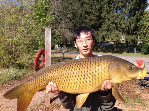 25-lb Common Carp caught using the same method