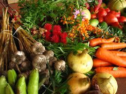 organic-farming-at-home