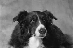 Dog Welfare; A Brief History